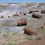 Where to find petrified wood