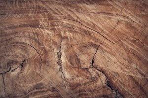 petrified wood for rock tumbler