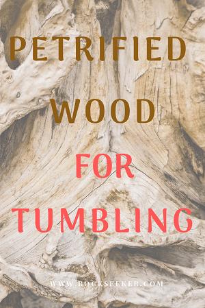 petrified wood for polishing