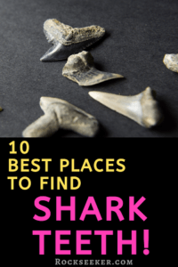 where to look for shark teeth fossils