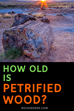 how old petrified wood is