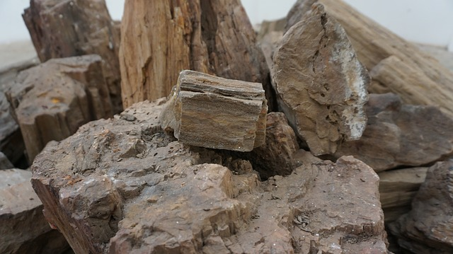 collection of petrified wood found in new mexico