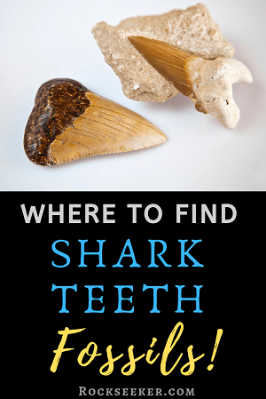 where to hunt of shark teeth fossils