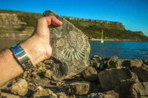 fossil near the ocean