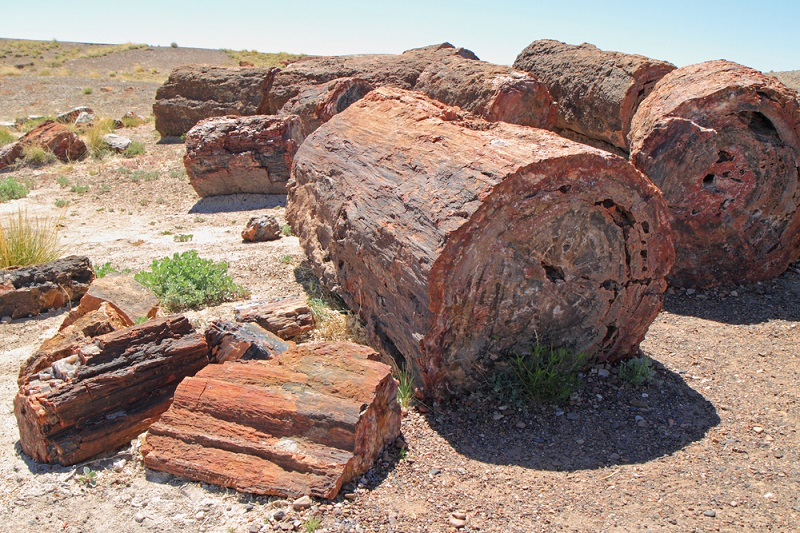 how old is petrified wood