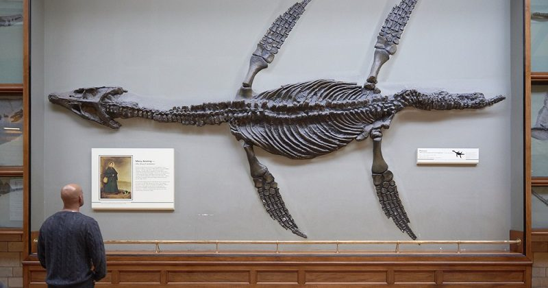man looking at dinosaur fossil in museum