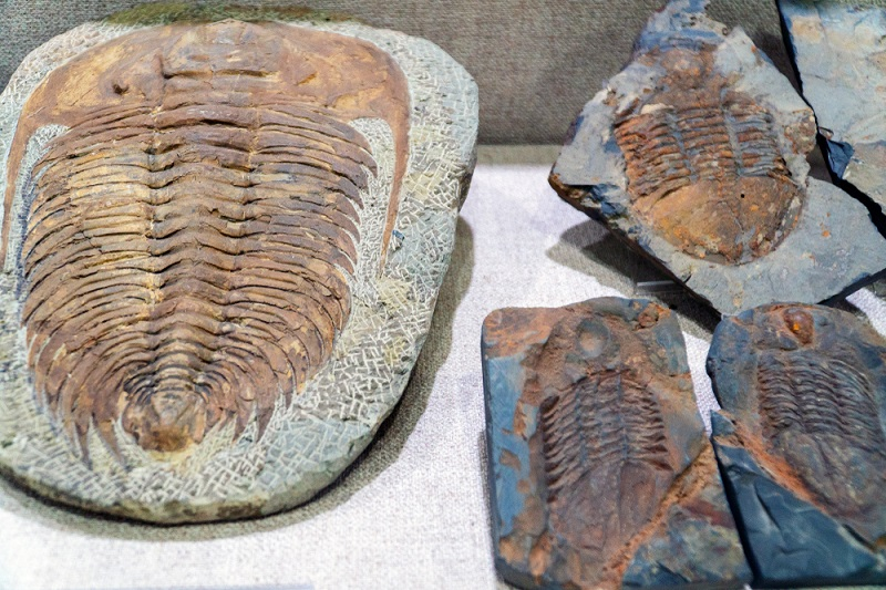 when did trilobites become extinct