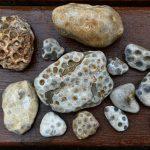 value of petoskey stones