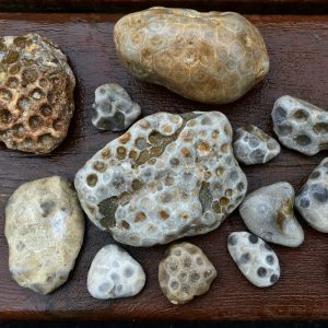 value of petoskey stones