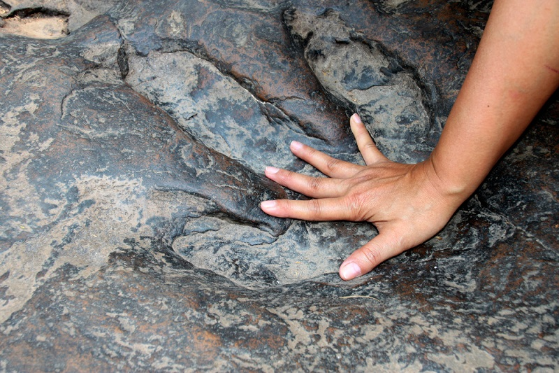 persons hand inside a dinosaur footprint fossil