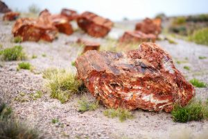 looking for petrified wood in nevada