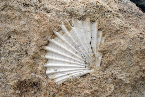 step by step guide how to clean sea shell fossils