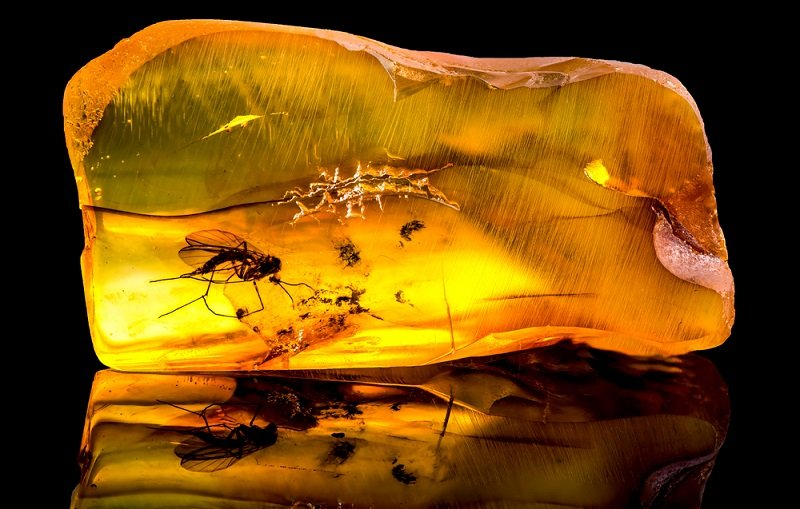 natural amber with insect inclusion