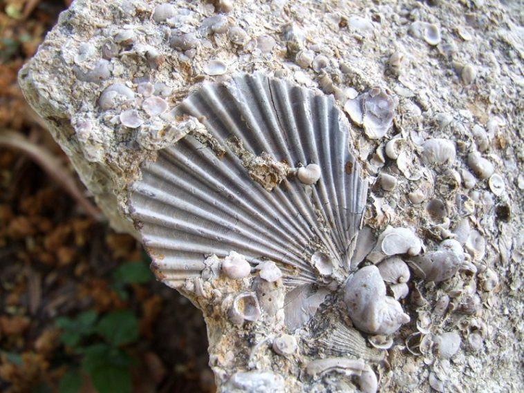 where to find fossils in texas