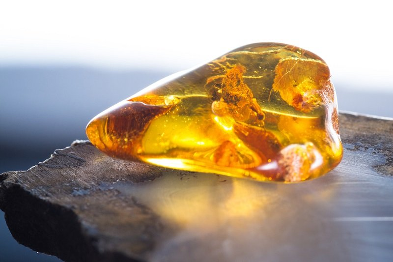 polished amber with insect inclusion